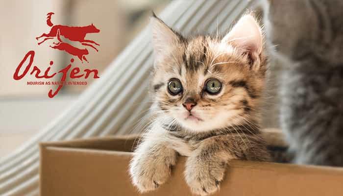 Orijen-kitten-korm